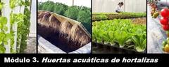 Curso en Fundación Sales sobre Huertas Acuáticas Acuapónicas