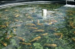 AZTI lidera un proyecto para impulsar nuevas estrategias de valorización de subproductos de la acuicultura. Foto: AZTI
