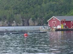 jaulas acuicultura salmón Noruega
