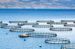 Jaulas acuicultura