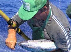 Azores atún