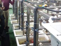 Ifapa Agua del Pino acuicultura