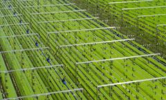 Fotobiorreactores  Proyecto Miracles acuicultura