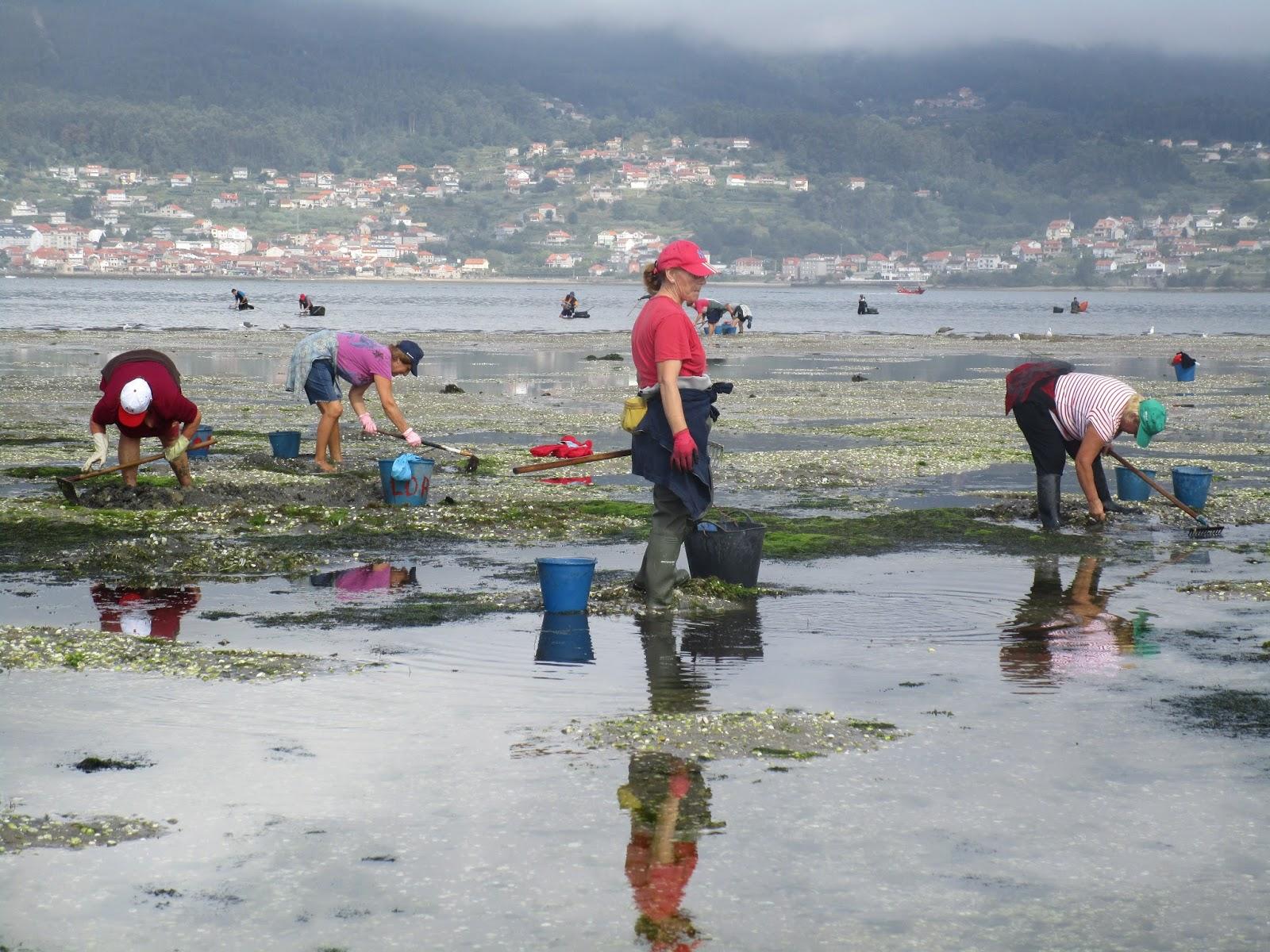 mariscadoras trabajando