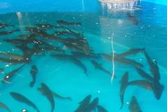Tanque peces acuicultura. Foto: AZTI