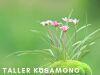 Taller Kusamono