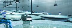 ATC Patogania acuicultura _