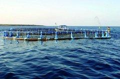 Canarias acuicultura