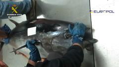 Incautación de atún rojo ilegal