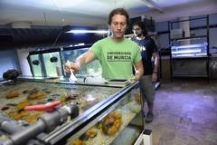 Murcia avanza en la reproducción en cautividad de especies del Mar Menor para su recuperación