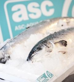 Salmon acuicultura ASC