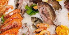 productos del mar pesca acuicultura PrimeFish