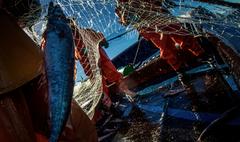 Pesca fresca Vigo