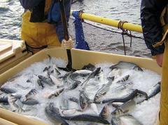 Sacrificio peces
