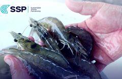 Sustainable Shrimp Partnership acuicultura