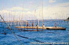 La acuicultura se plantea como una solución en la lucha contra el hambre en el mundo