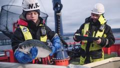 Cermaq acuicultura salmon trucha
