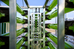 AlgaEnergy  microalgas acuicultura