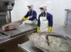 Planta de procesado de atún Vietnam