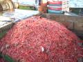 Pesca camaron nailon Chile