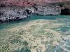 Proliferación de algas en Canarias