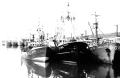 Flota Imagen Archivo SIPSA