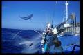 Pesca de atún en Japón
