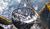 Pesca de atún
