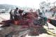 Pescadores de la flota de cerco