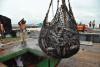 Pesca Ilegal África