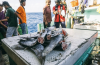 Sea Sheperd Tanzania