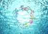 Panel de Alto Nivel para una economía sostenible del océano