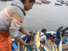 Pesca perico Perú