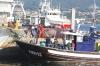 Flota de cerco en el puerto de Vigo