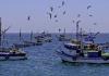 Perú pesca